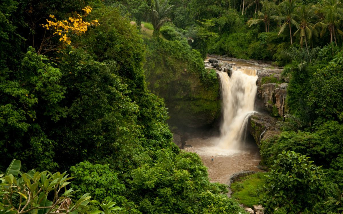 Обои деревья, джунгли, водопад картинки на телефон
