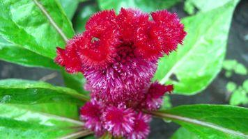 Бесплатные фото цветок,природа,лето,макро,цветы