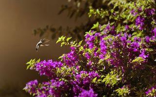 Бесплатные фото калибри,куст,цветки,весна,лето,клюв,перья