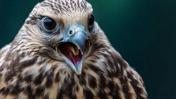 Photo free beak, tongue, eyes