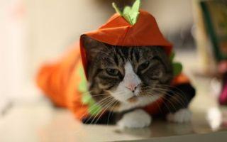 Фото бесплатно кот, костюм, красный