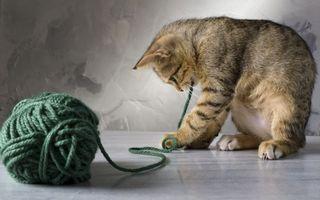 Фото бесплатно кот, клубок, игра
