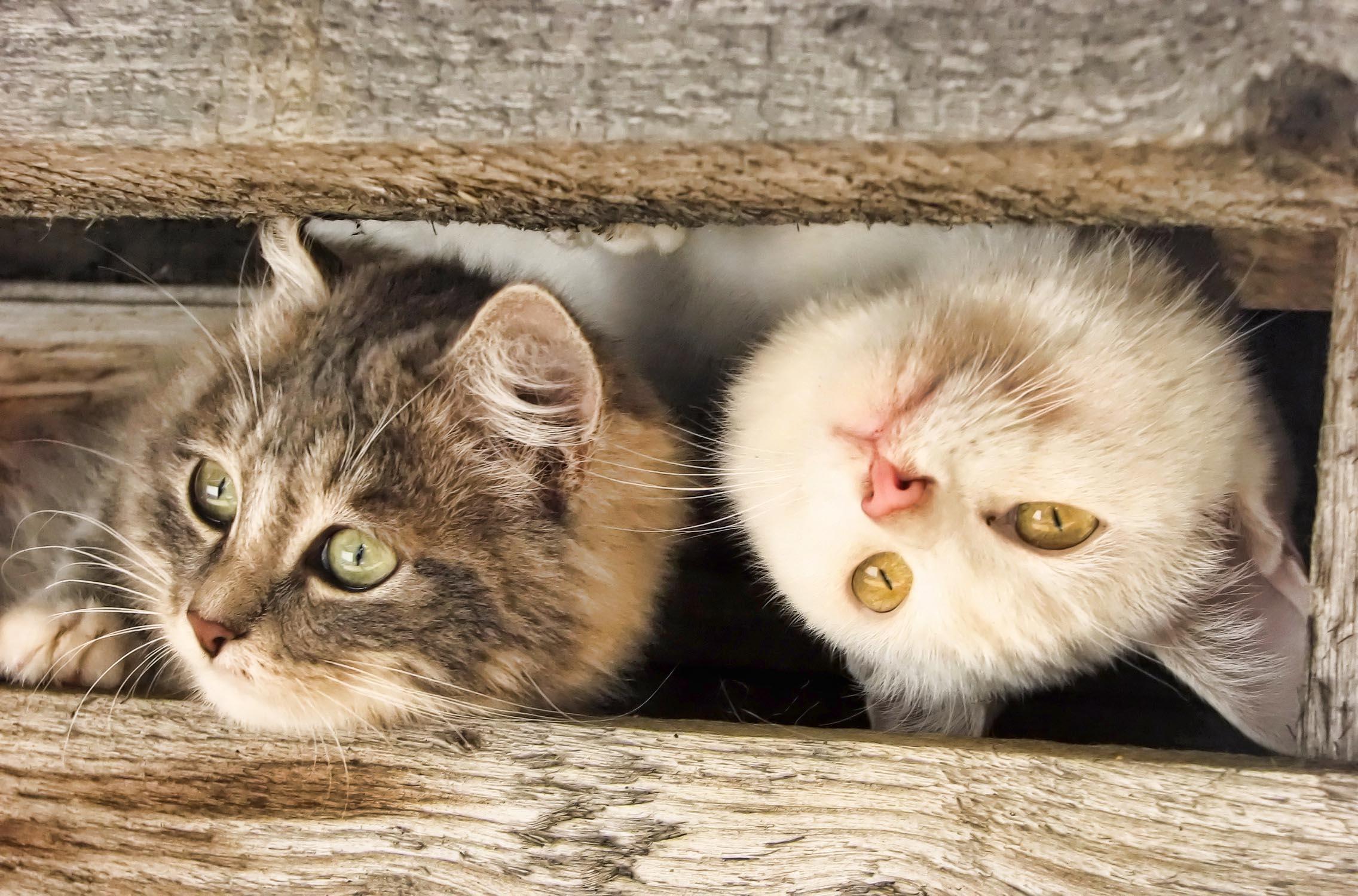 прикольные праздник кот животные загрузить
