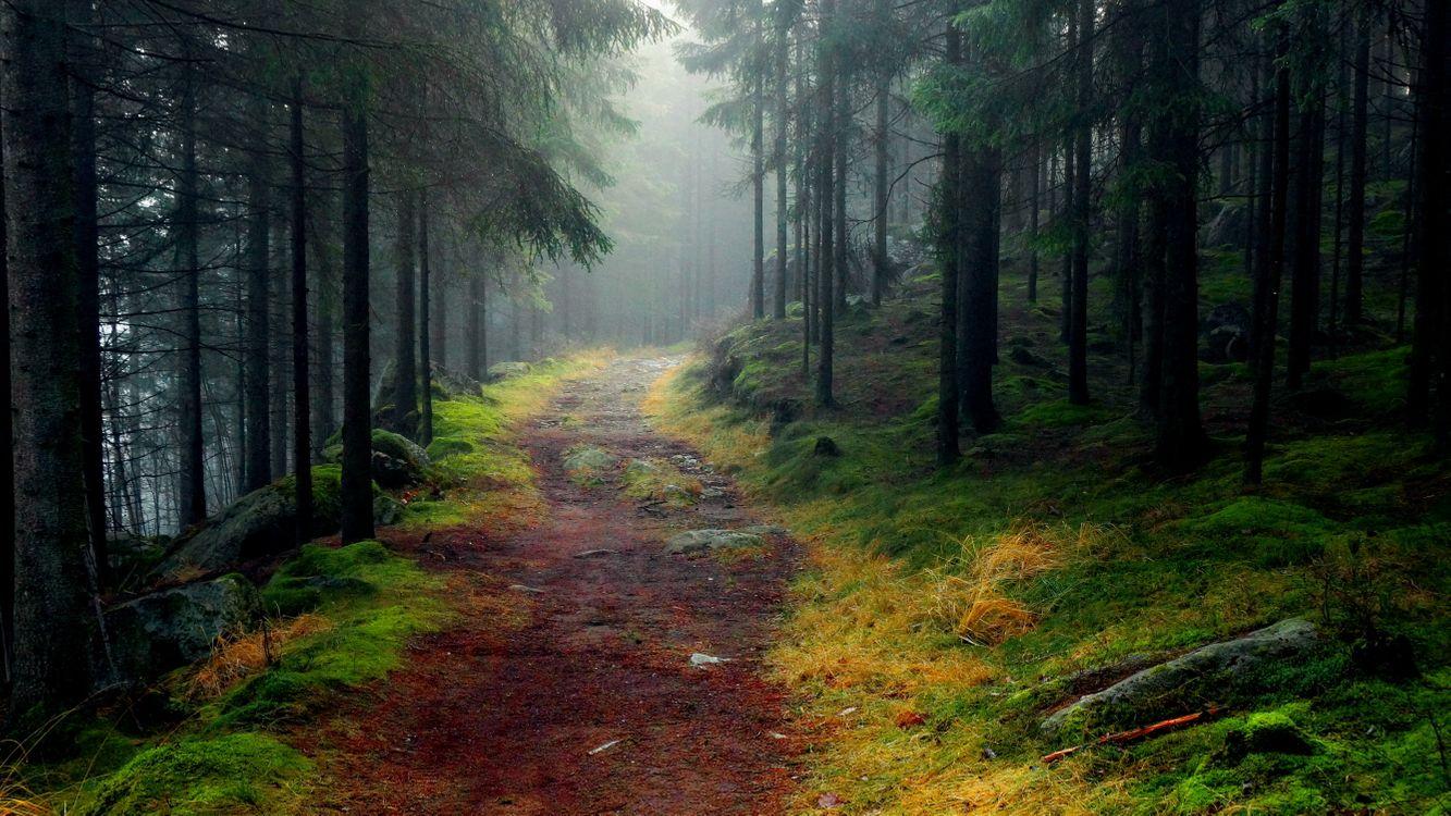 Фото бесплатно лес, деревья, дорога, пейзаж, природа, камни, пейзажи