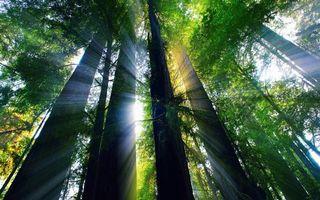 Фото бесплатно крон, лес, стволы