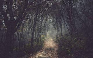 Бесплатные фото лес,деревья,дремучий,дорожка,тропинка,листья,трава