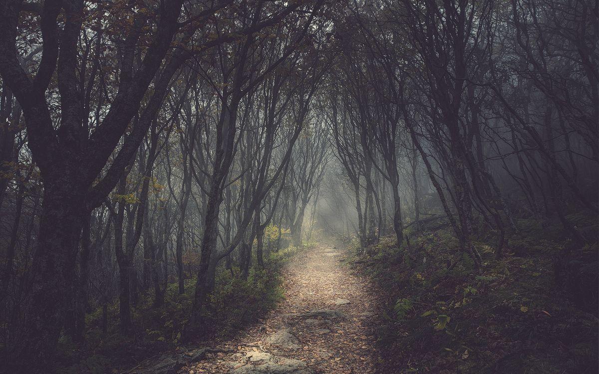 Фото бесплатно лес, деревья, дремучий, дорожка, тропинка, листья, трава, камни, ветки, природа, природа