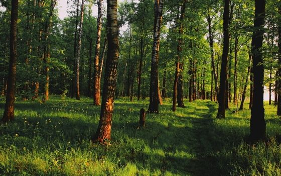 Photo free forest, russia, grass