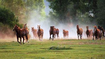 Бесплатные фото лошади,кони,скакуны,грива,шерсть,бег,галоп