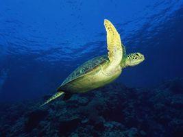 Заставки море, черепаха, панцирь