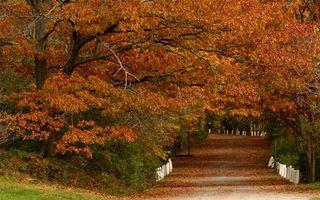 Бесплатные фото осень, парк, аллея, деревья, дорожка, листва, желтая