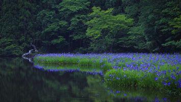 Фото бесплатно озеро, отражение, цветы