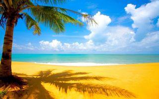 Фото бесплатно пальма, песок, пляж
