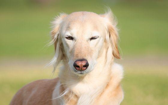 Фото бесплатно пес, щенок, ошейник