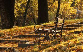 Фото бесплатно скамейка, парк, деревья, листья, осень, природа