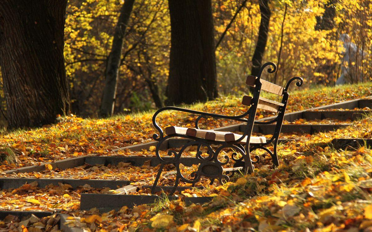 Фото бесплатно скамейка, парк, деревья, листья, осень, природа, природа