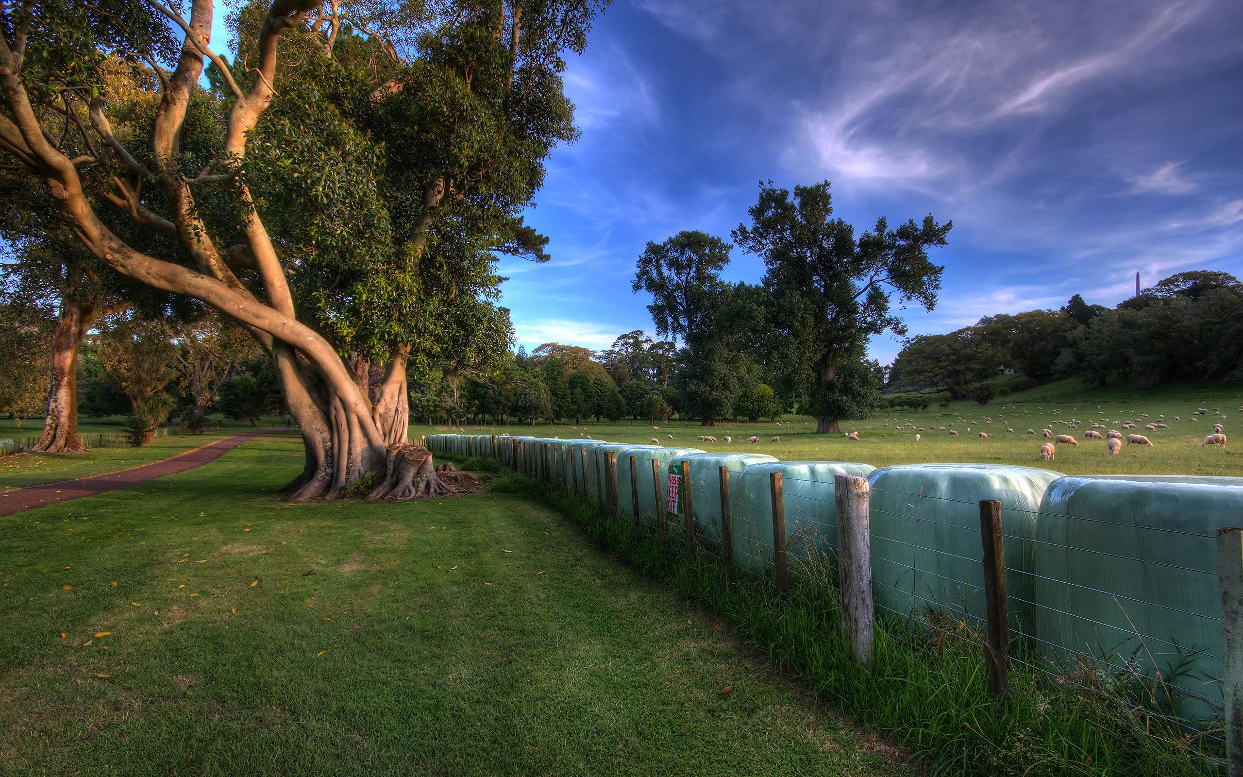 трава, деревья, ограда