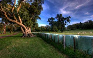 Заставки трава, деревья, ограда