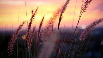 Бесплатные фото трава,поле,небо,закат,урожай,облака,стебель