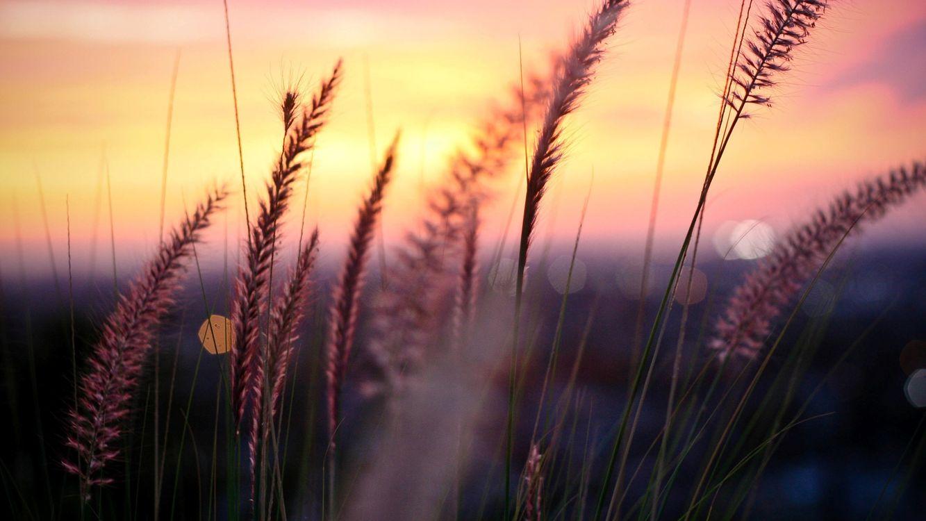 Фото бесплатно трава, поле, небо, закат, урожай, облака, стебель, пейзажи, пейзажи