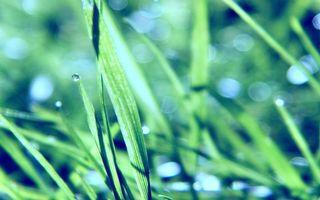 Фото бесплатно трава, травинка, роса