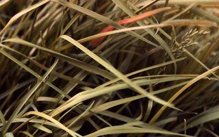Фото бесплатно трава, заросли, растение, лето, поле, колоски, травинки, природа