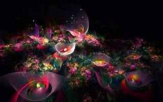 Заставки цветы, красиво, отблески, яркие, огоньки, темно, абстракции
