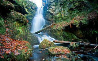 Бесплатные фото водопад,мох,ил,лес,бревна,осень,листья