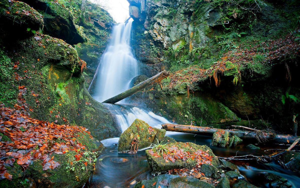 Фото бесплатно водопад, мох, ил, лес, бревна, осень, листья, природа, природа