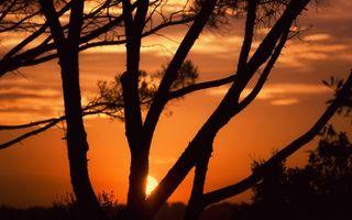 Фото бесплатно дерево, облака, солнце