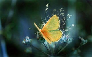 Фото бесплатно бабочка, цветок, желтая