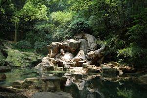 Бесплатные фото будда,памятник,вода,тигри,ліс,відпочиває,пейзажи