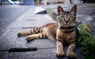 Бесплатные фото асфальт,трава,кот,лежит,морда,лапы,глаза