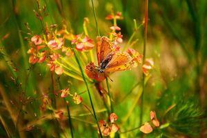 Фото бесплатно цветы, бабочка, макро