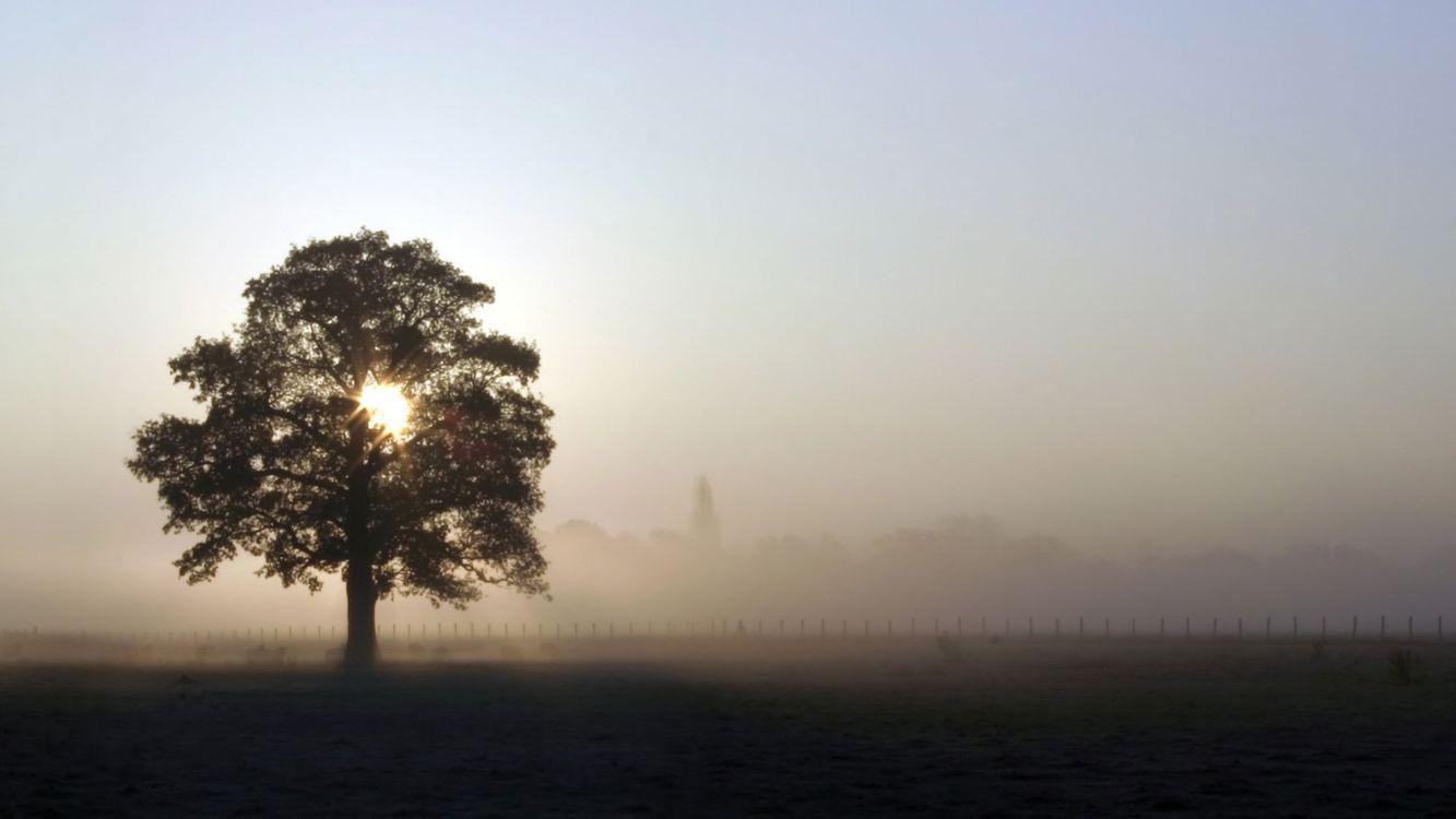 Фото бесплатно дерево, туман, забор - на рабочий стол