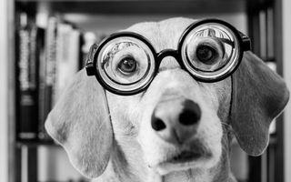 Фото бесплатно дог в очках, линзы, книги