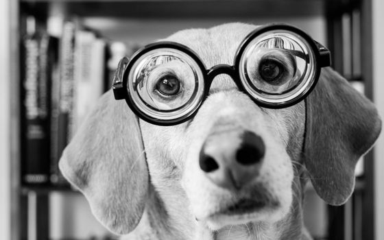 Photo free dog with glasses, lenses, books