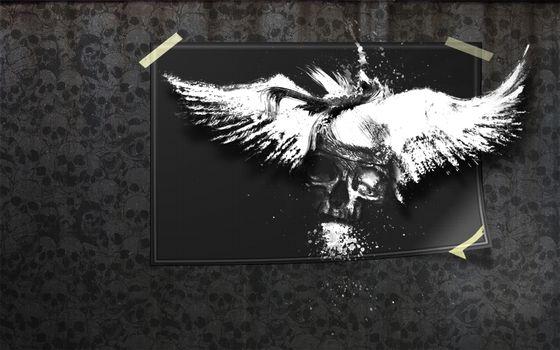 Photo free picture, skull, head
