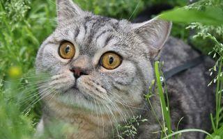 Бесплатные фото кот,морда,глаза,усы,уши,трава,кошки