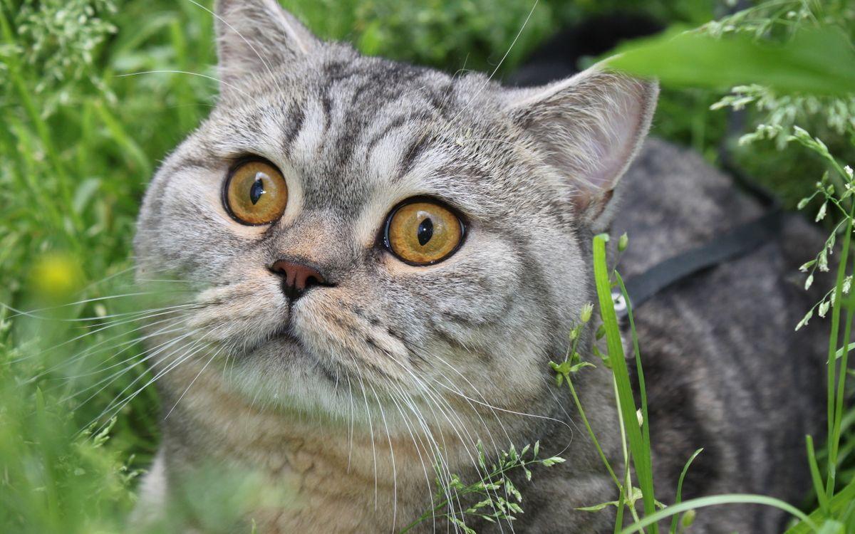Фото бесплатно кот, морда, глаза - на рабочий стол