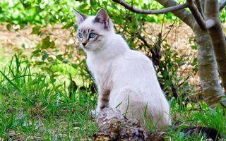Фото бесплатно кот, котенок, глаза