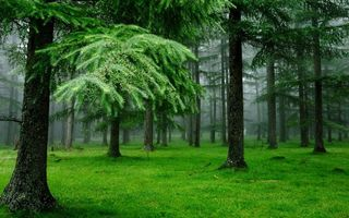 Photo free forest, trees, moss