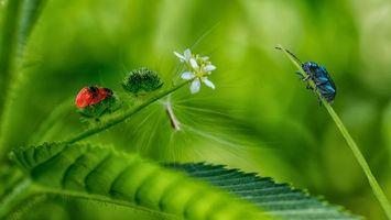 Заставки лист, цветы, жуки, макро