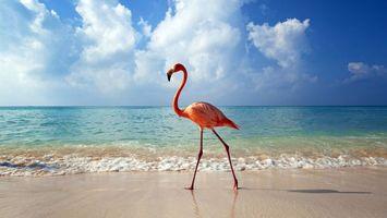 Бесплатные фото море,пляж,фламинго,берег,небо,солнечный,день