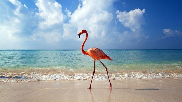 Заставки море,пляж,фламинго,берег,небо,солнечный,день,птицы