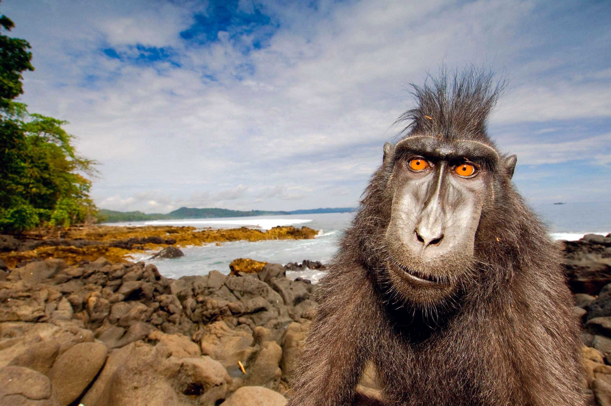 обезьяна, море, пляж