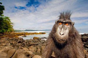 Фото бесплатно обезьяна, море, пляж