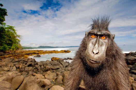 Заставки обезьяна, море, пляж