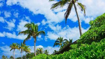 Бесплатные фото пальмы,деревья,кора,ветки,трава,дом,крыши