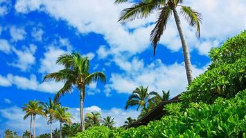 Фото бесплатно пальмы, деревья, кора